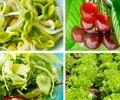 7 български суперхрани от пролетта